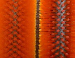 直狀毛料vs波浪毛料-以植毛式清洗用毛刷輪為例